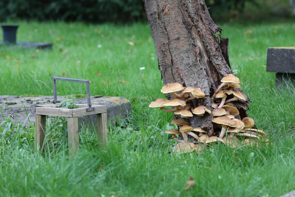 mushroom burial