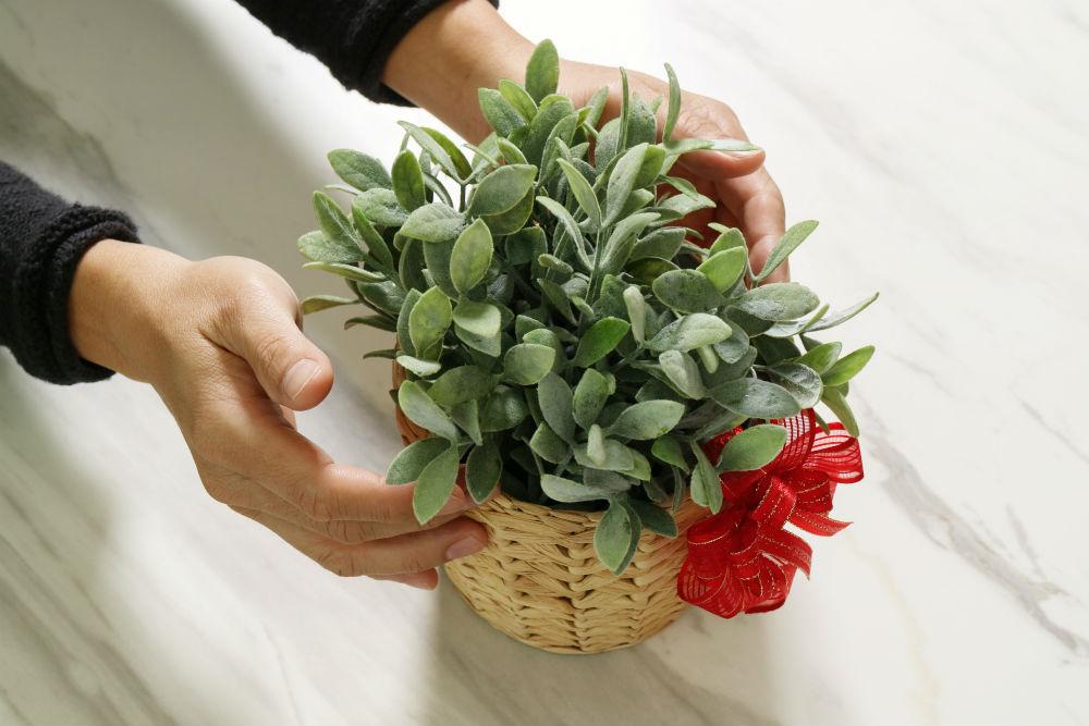 gift for bereaving